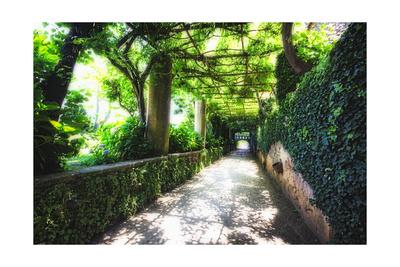 Arbor Path, Ravello, Italy Photographic Print by George Oze