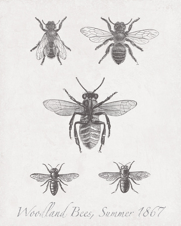 Woodland Insects I Giclee Print by Maria Mendez