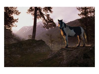 Mountain Splendor Print by Steve Hunziker