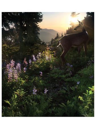 Deer Pass Print by Steve Hunziker