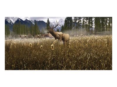 Misty Elk Posters by Steve Hunziker