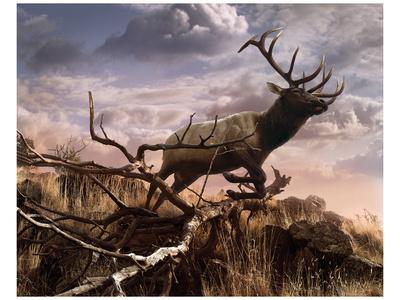 Elk Passage Poster by Steve Hunziker