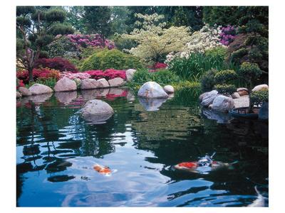 Water Garden I Posters