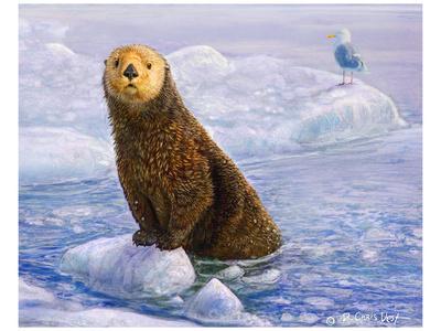 Otter Sketch Poster by Chris Vest
