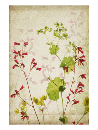 Red Bells Prints by Judy Stalus