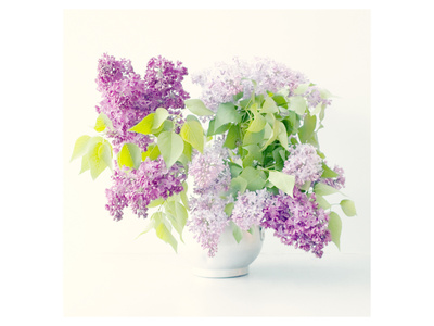 Lilac Bouquet Print by Judy Stalus