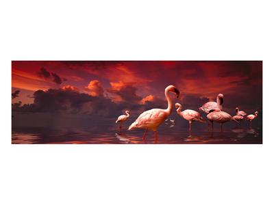 Flamingo Sunset Prints by Richard Desmarais