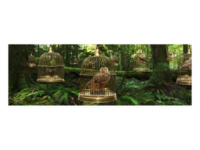 Birdcage Forest Art by Richard Desmarais