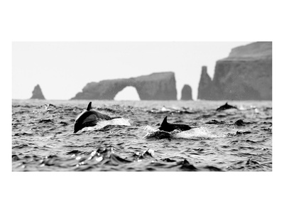 Dolphins at Anacapa Arch Art by Steve Munch