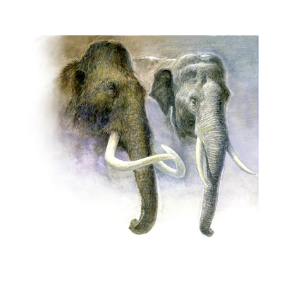 Painting Comparison of a Woolly Mammoth and an Asian Elephant Giclee Print by Kazuhiko Sano