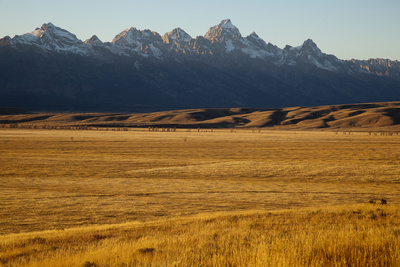 A Field of Golden Grass in Grand Teton National Park Photographic Print by Steve Winter