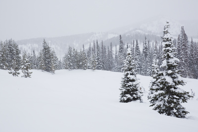 Snowfall in Wyoming's Gros Ventre Wilderness Area Photographic Print by Steve Winter