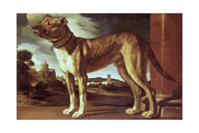 Portrait of a Dog Giclee Print by Guglielmo Ciardi