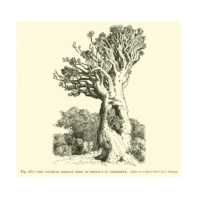 The Colossal Dragon Tree of Orotava in Teneriffe Giclee Print