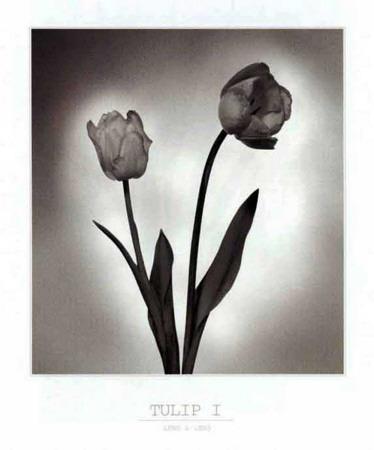 Tulip I Art