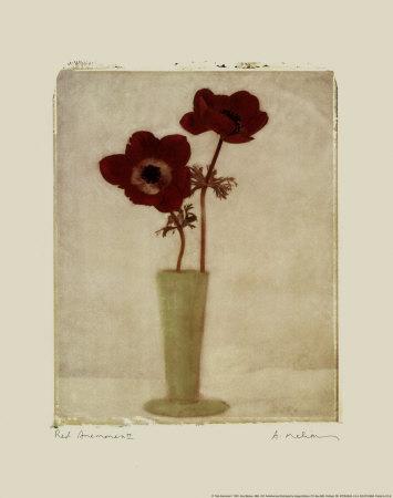 赤いアネモネII ポスター : エイミー・メリオウス