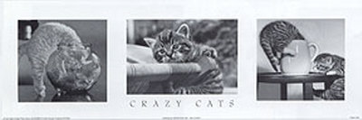 Crazy Cats Prints
