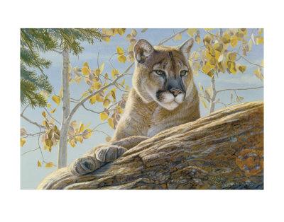 Front Range Cougar Prints by Kalon Baughan