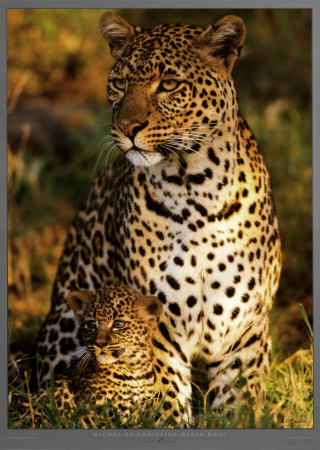 Leopard with Infant at Masai-Mara, Kenya Impresso artstica