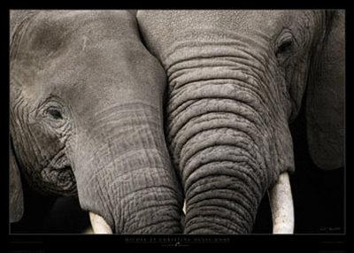 http://cache2.allpostersimages.com/p/LRG/8/842/7LKY000Z/posters/denis-huot-michel-christine-abbraccio-di-elefanti.jpg