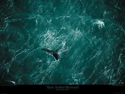 Baleine Posters by Yann Arthus-Bertrand