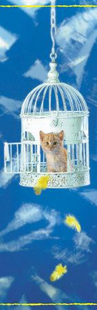 Kitten in Birdcage Prints