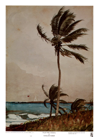 Palm Tree, Nassau Poster by Winslow Homer