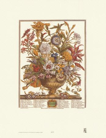 Twelve Months of Flowers, 1730, September Prints by Robert Furber