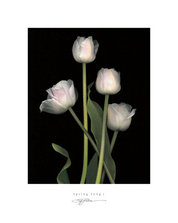 Spring Song I Prints by S. G. Rose