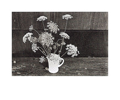 Queen Anne's Lace Prints by Lilo Raymond