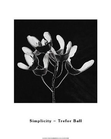 Simplicity Poster by Trefor Ball
