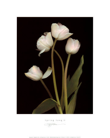 Spring Song II Print by S. G. Rose
