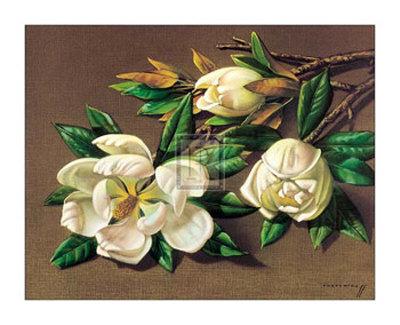 Magnolias Art by Vladimir Tretchikoff