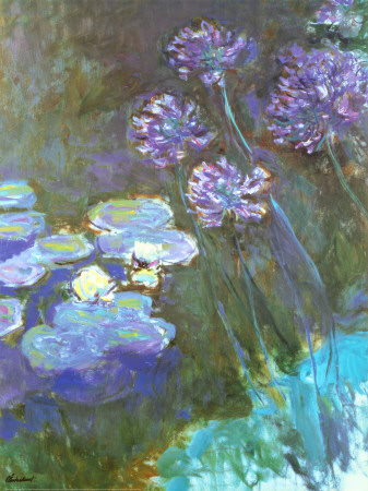 Water Lilies and Agapanthus Art Print