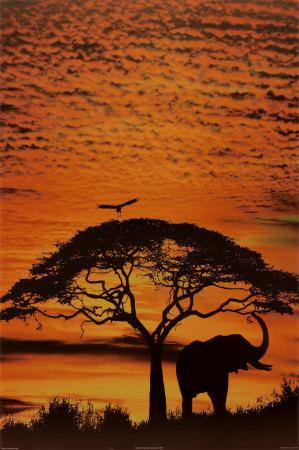 Africká obloha Plakát