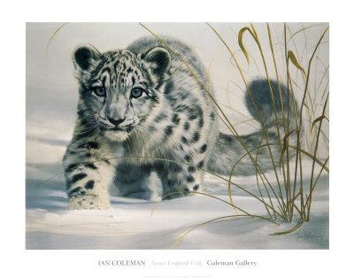Snow Leopard Cub Prints by Ian Coleman at AllPosters.com