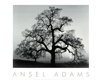 Oak Tree, Sunset City, California Print by Ansel Adams