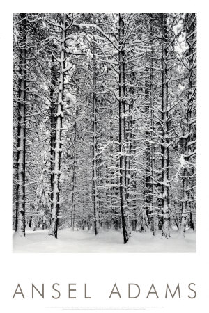 Barrskog i snö, Yosemite nationalpark, 1932|Pine Forest in Snow, Yosemite National Park, 1932 Posters av Ansel Adams