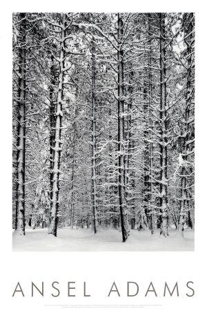 Bosque de pinos en la nieve, Parque Nacional de Yosemite, 1932 Pósters por Ansel Adams