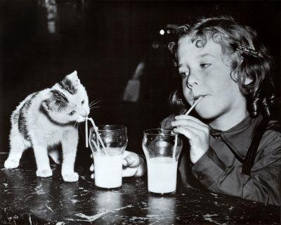 Milk Buddies Prints