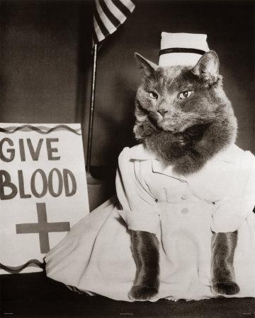Nurse Kitty Four Paws Prints