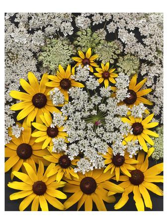 Wildflowers black eyed Susans Queen Ann Lace Art