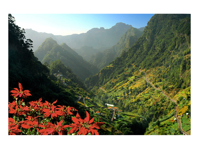 Mountain scenery and the village of Cruzinhas, Madeira Island, Portugal Prints