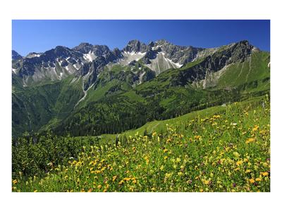 Flower meadow at Fellhorn mountain near Oberstdorf, Allgaeu, Swabia, Bavaria, Germany Prints