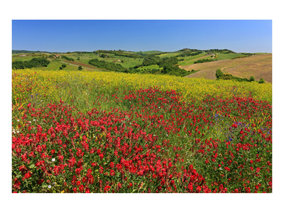 Landscape near Volterra in Spring, Province of Pisa, Tuscany, Italy Prints