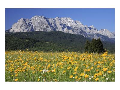 View over meadows towards the Wettersteinwand near Garmisch-Partenkirchen, Bavaria, Germany Posters