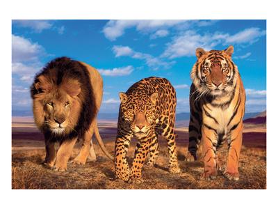 Three Big Cats Prints