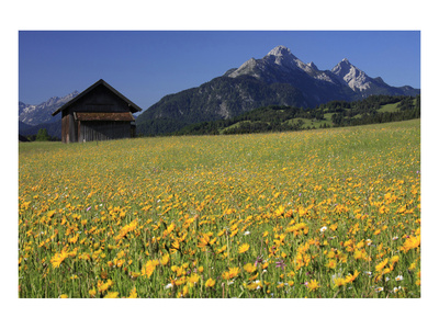 View over meadows towards the Grosse Arnspitze, Bavaria, Germany Prints