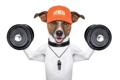 Fitness Dog Plastic Sign by Javier Brosch