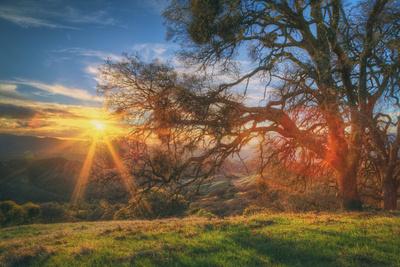 Sunset Oak, Mount Diablo State Park, Northern California Photographic Print by Vincent James